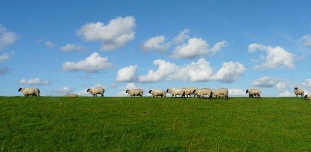 Cielo a pecorelle, acqua a catinelle