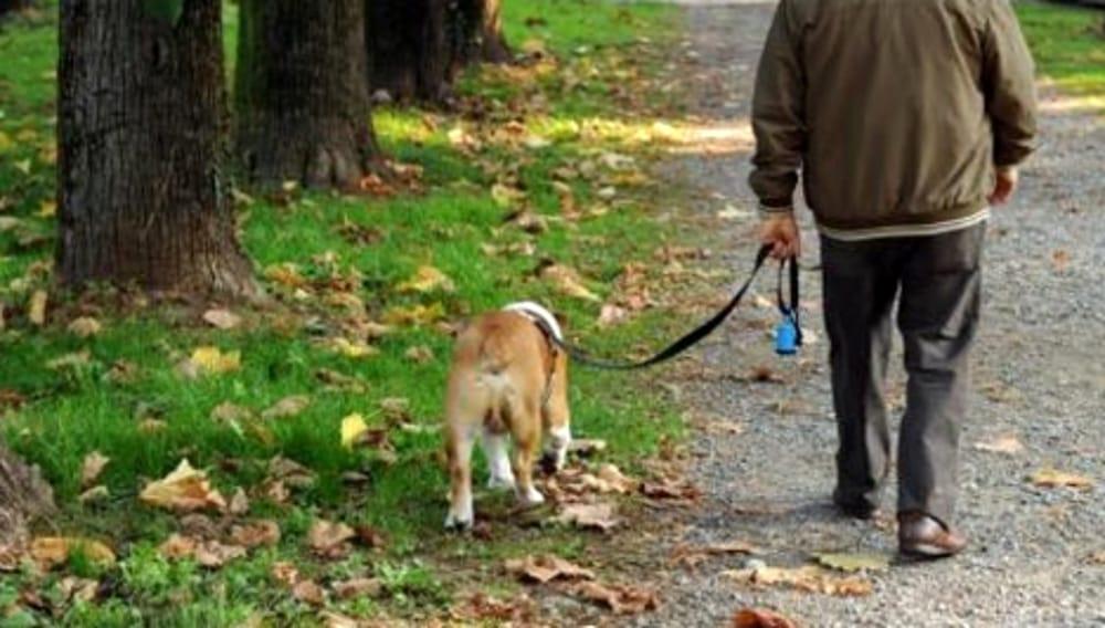 La responsabilità da omessa custodia di animale domestico affidato a terzi.