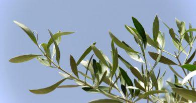 Domenica delle Palme 2020 – Torrimpietra