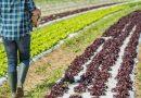 """Consegne a domicilio dei  prodotti agricoli, anche la Cia di Roma aderisce al progetto """"Dal campo alla tavola"""""""